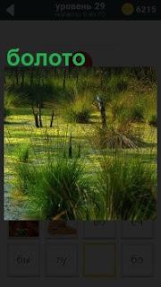 Опасная трясина, может затянуть в свое болото любого кто попробует нарушить покой