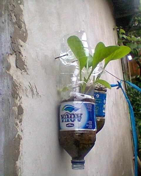 menanam sayuran di lahan sempit samping rumah kami