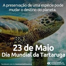 Resultado de imagem para 23 de maio dia da tartaruga