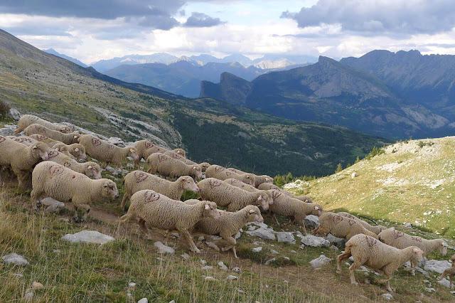 Pastos en los Hautes-Alpes en el Devoluy Pierre Rigaux