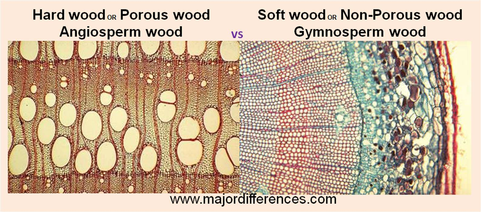 Difference between Hard wood and Soft wood - MD