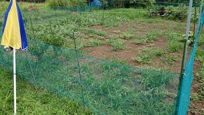 小玉スイカのエリアの除草をしていきます。 スイカは左側と右側奥の三か所。