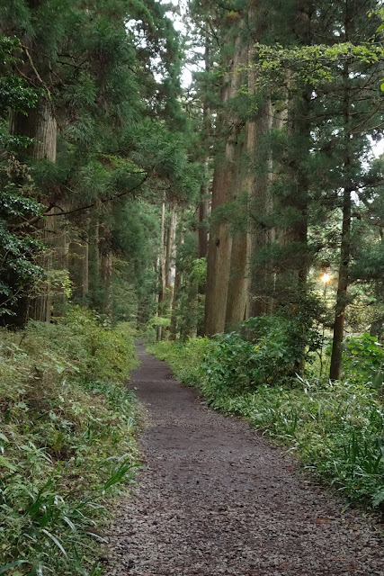 Cedar Avenue, Hakone