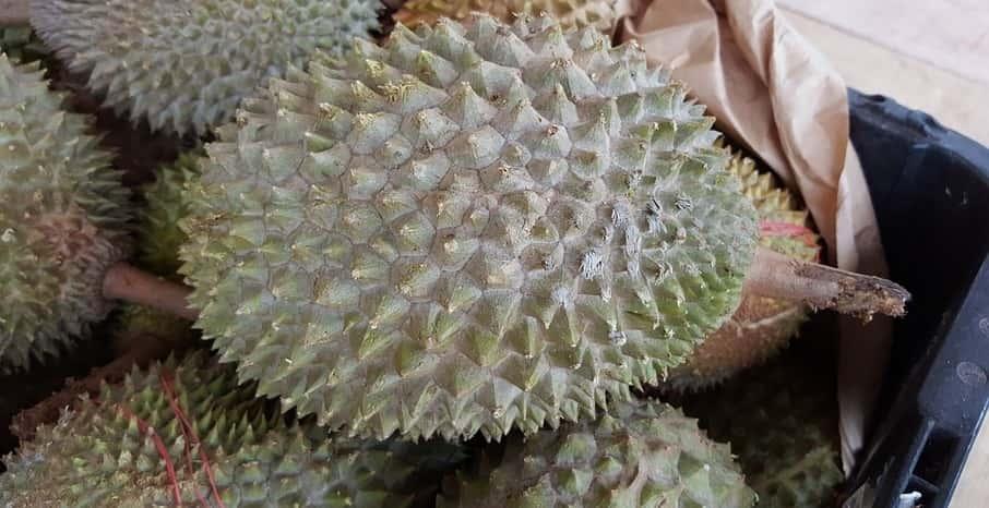 Bolehkah Ibu Hamil Makan Durian? Ini Jawaban Ahli Kesehatan