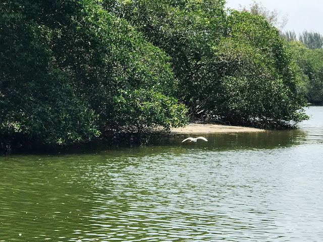 Pantanal Carioca - o paraíso escondido