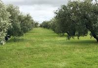 diseño de bosques comestibles en españa