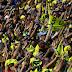 Valentino Rossi Absen, MotoGP San Marino 2017 Alami Penurunan Jumlah Penonton