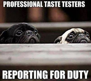 Dog Humor : Professional Taste Testers Reporting For Duty