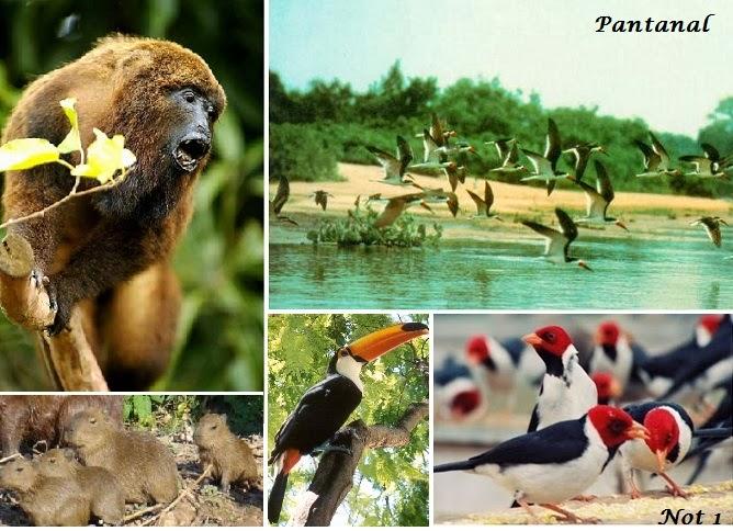 Grandes Regiões Naturais do Planeta
