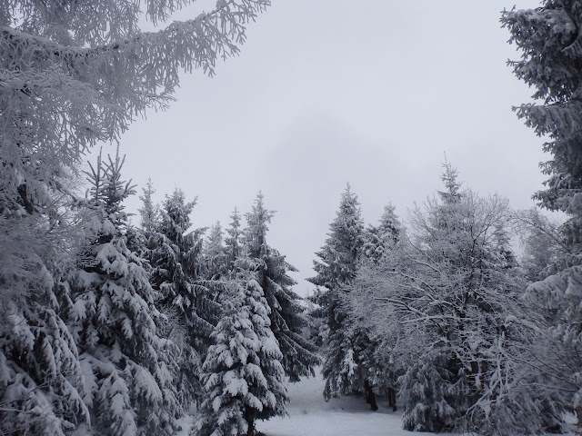 Ze Śnieżnicy w sumie można oglądać głównie las.