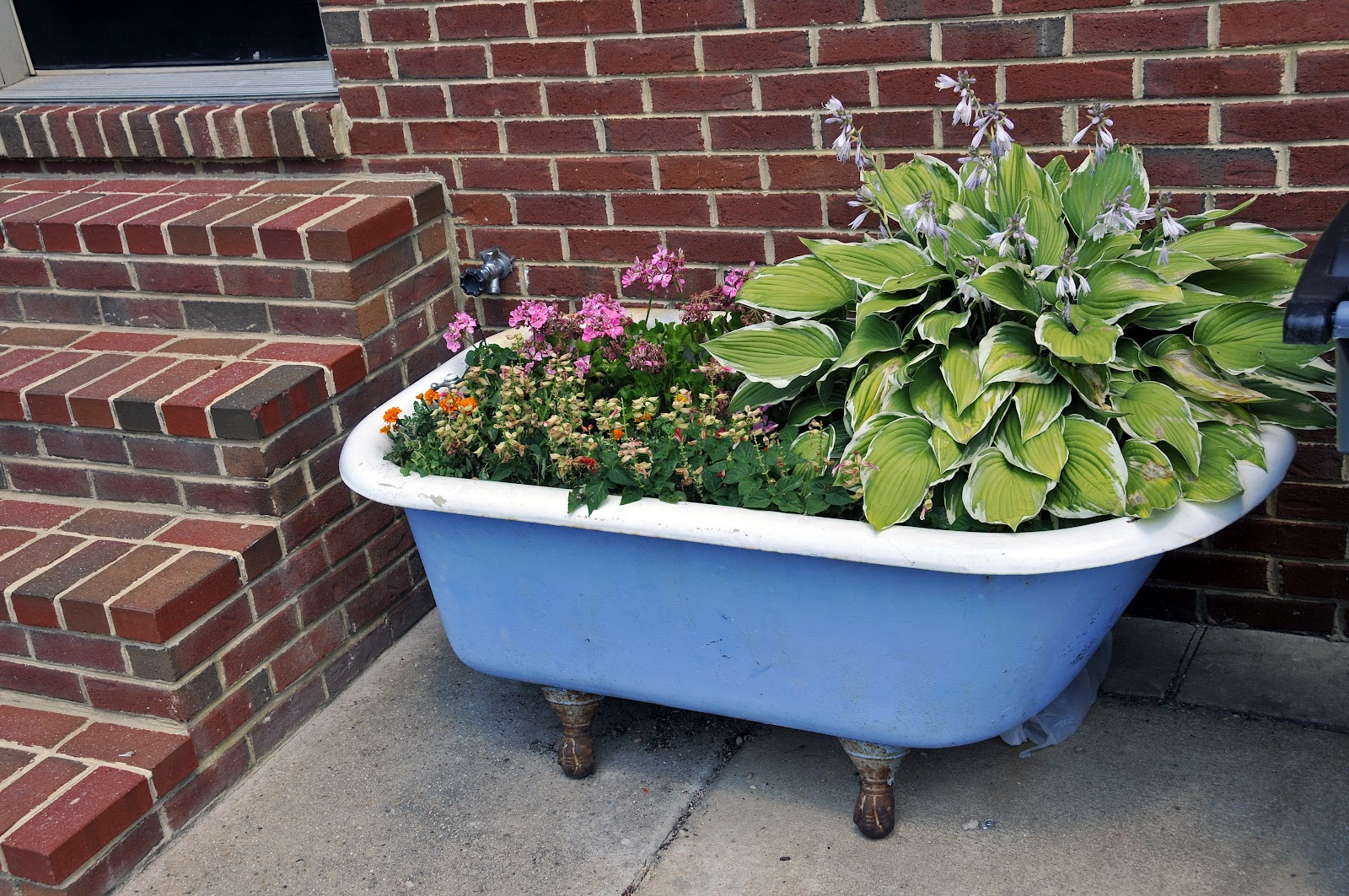 Dr Dan S Garden Tips Using The Unusual