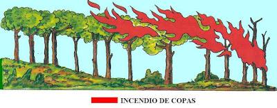 Fuego en las copas de los árboles
