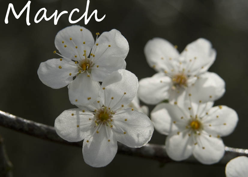 march - photo #39