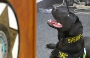 """Conheça o cão policial especialista em """"farejar pedófilos"""""""