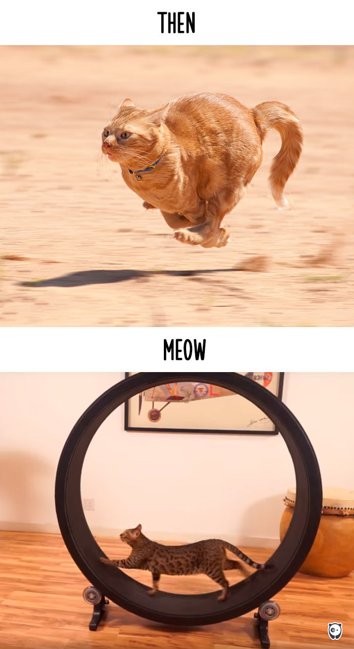 Then vs Meow How Technology Has Changed Cats' Lives (10+ Pics) - Running