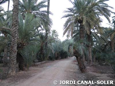 Camino entre el palmeral de Elche