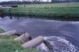 Resultado de imagen de lagos y humedales en contaminación