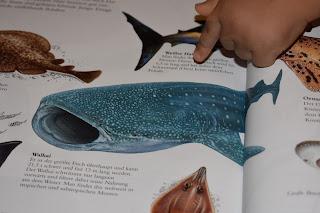 Kinderbücher über Tiere