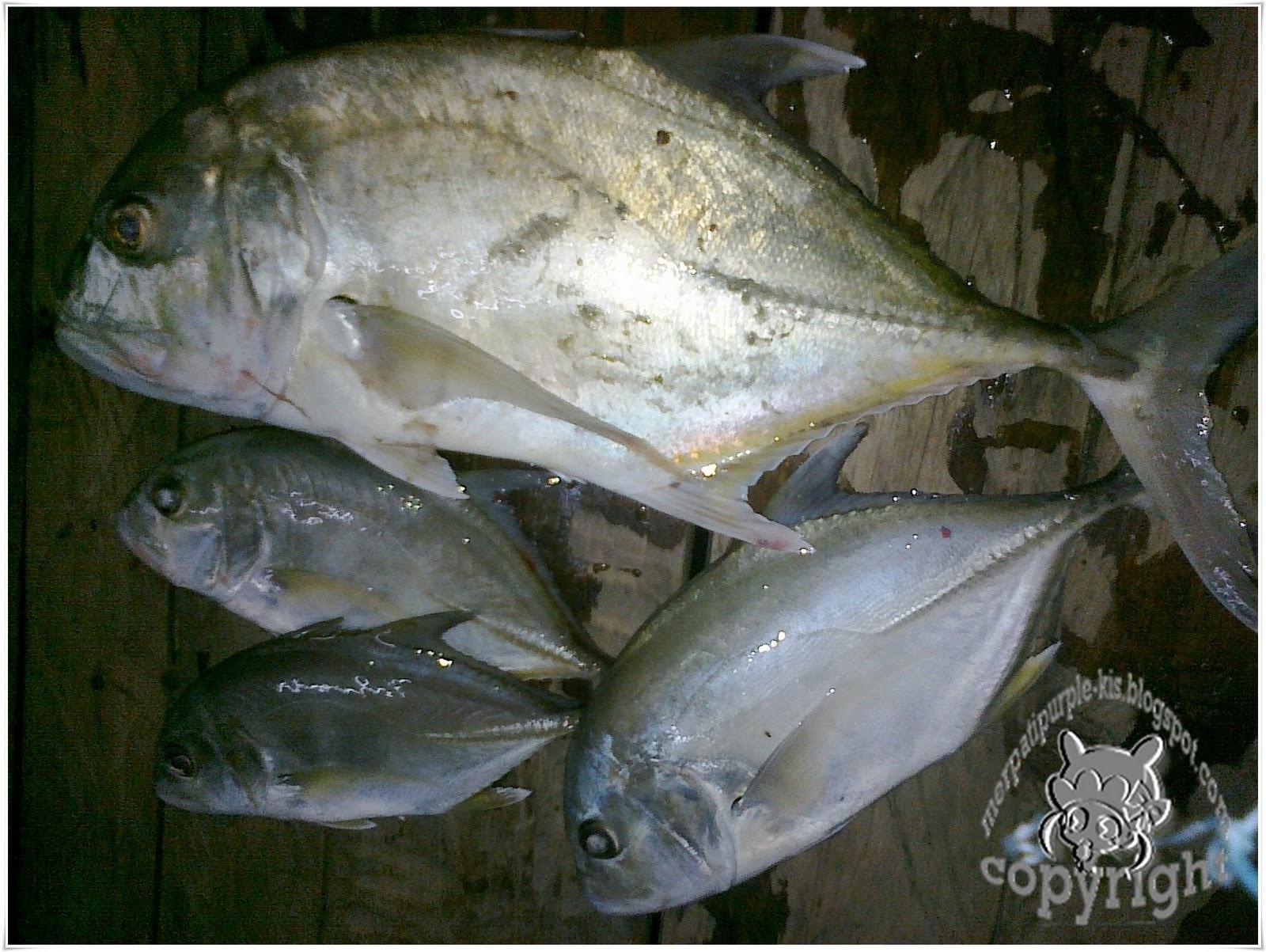 Ikan Raksasa @ Monster Fish | ♥♥ AsWifeAsMom
