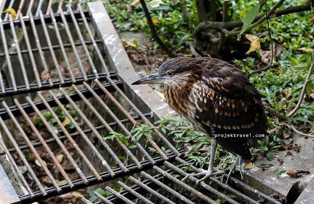 Taman Burung dan Harga tiket Taman Burung Kuala lumpur