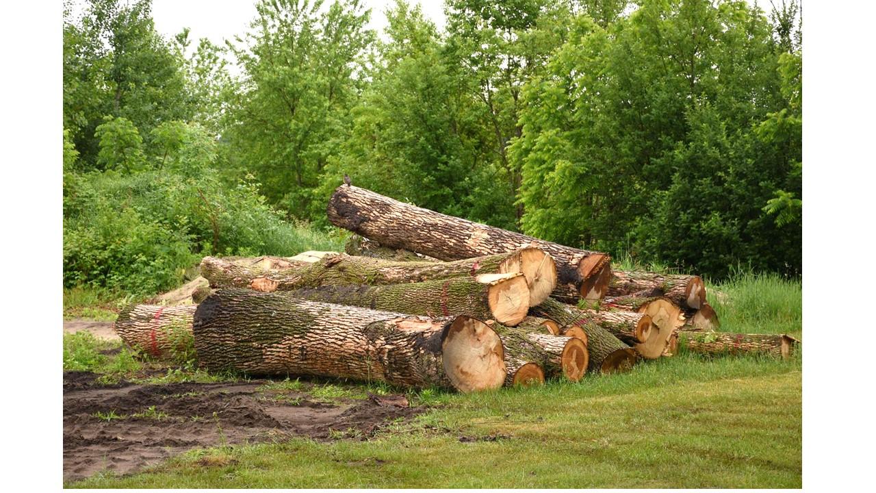 Hands to Hands Woodwork: EMERALD ASH BORER