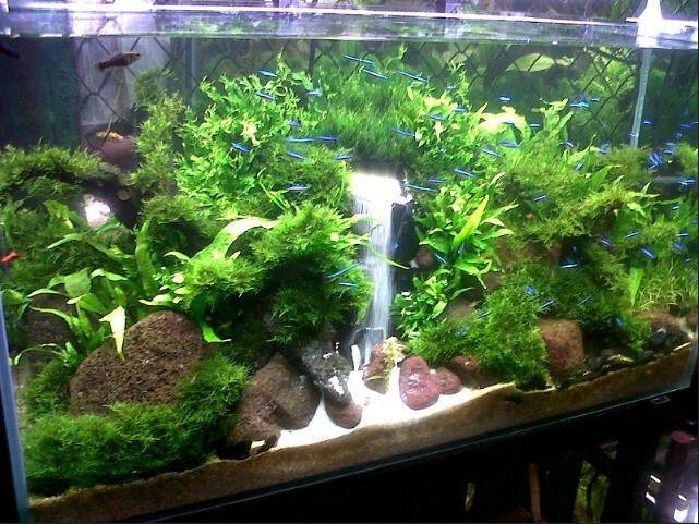 Galery Aquascape sederhana Dan Ikan Hias