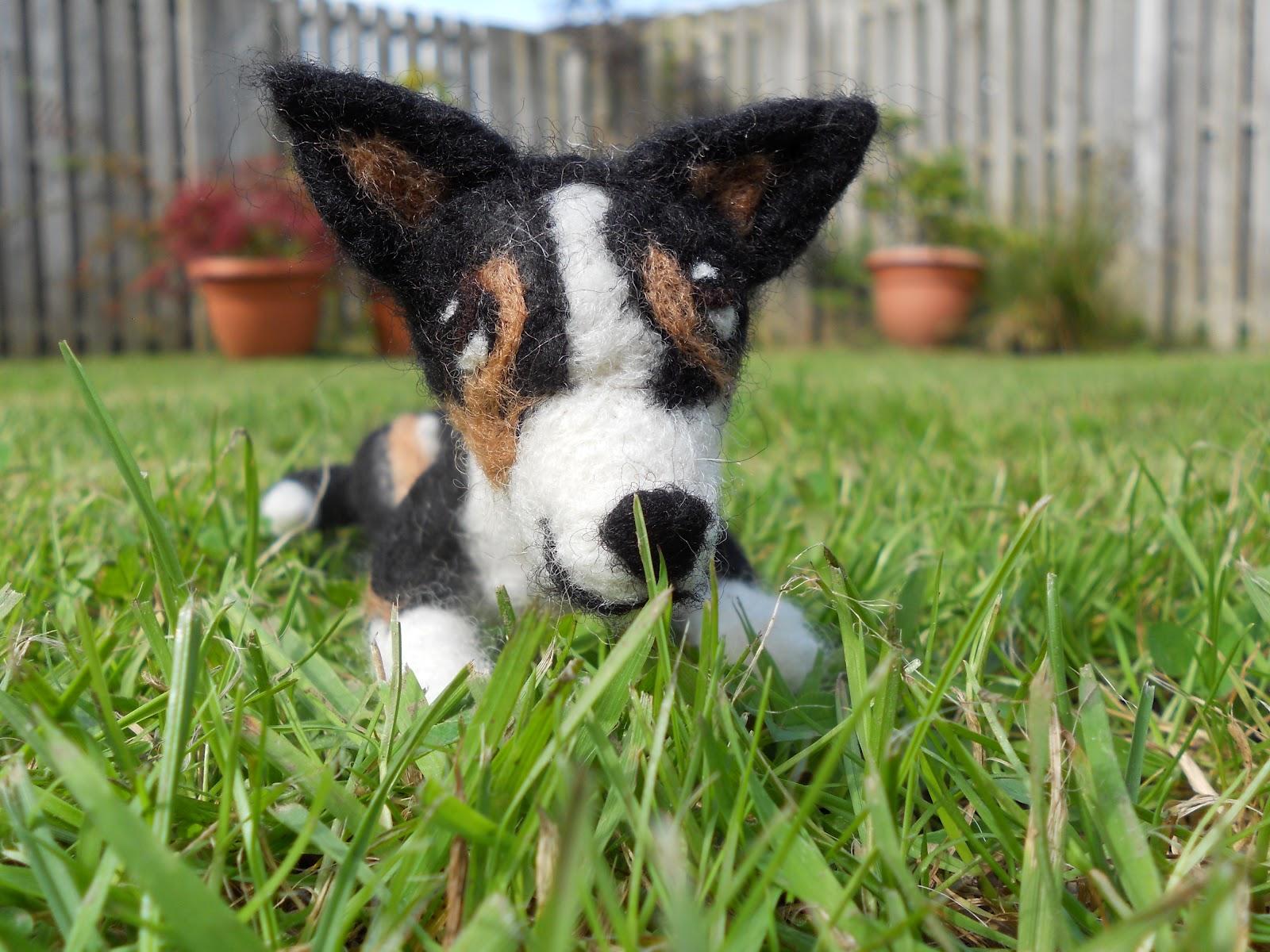 Ben Mcfuzzylugs : A-Z of dog breeds - Border Collie - photo#9
