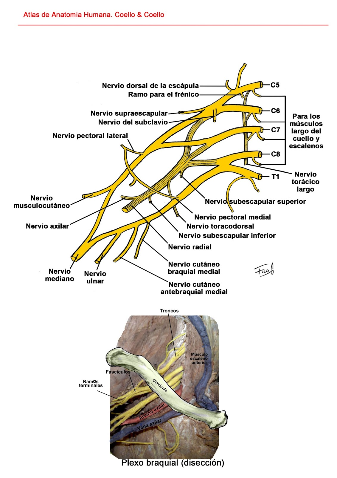 Anatomia en Taller