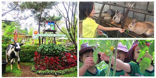 Tempat Wisata di Lembang Bandung Jendela Alam