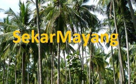 pohon kelapa desa sekar mayang