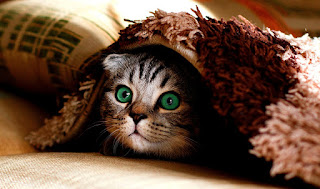 A cat with patterned grey fur and bright green eyes peeks its head out from under a rug.