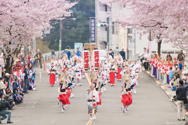 せいせき桜まつり、満開の桜の下で踊る江戸っ子連の阿波踊り