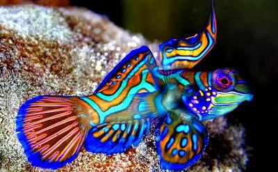 Makanan Ikan Hias Air Laut Aneka Ikan Hias