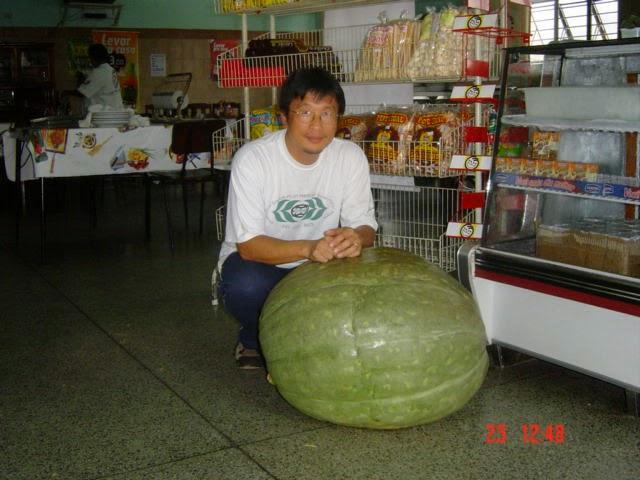 PROF.  LIN CHAU MING3