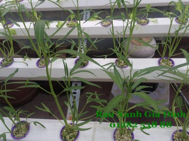 thi công lắp đặt giàn rau thủy canh tại tphcm - Thi công hệ thống thủy canh hồi lưu tại quận 11