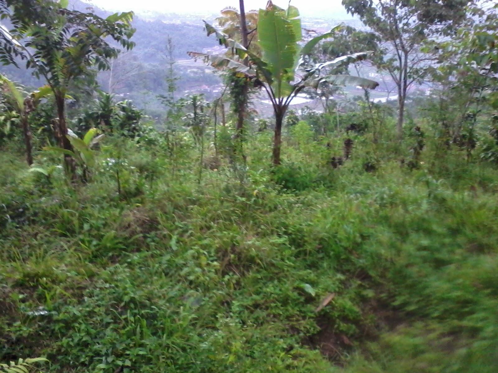 Foto-0246 Jual Tanah luas 4,4 Ha, Ketinggian 1000 m2 Jual tanah di cipanas jual tanah di puncak