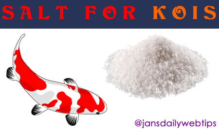 Taking Care of Your Koi Fish By Using Salt Bath