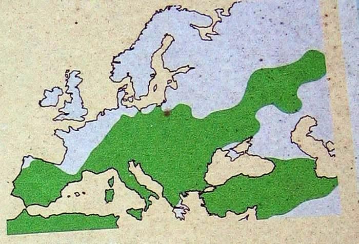 pupulus-alba-distribucion-europa