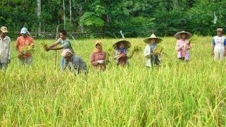 Contoh jenis ide peluang bisnis di desa pertanian yang menguntungkan dan menjanjikan