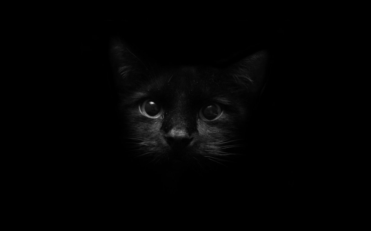 Images For Black Cat Wallpapers