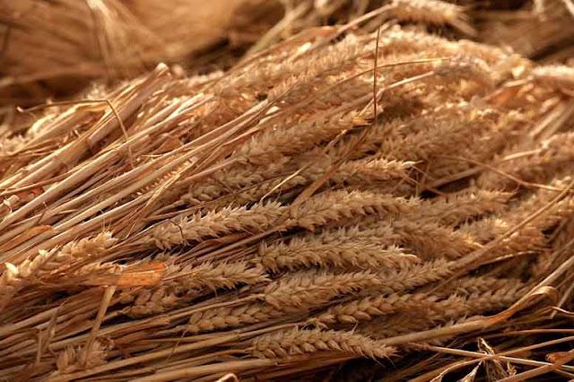 Berbagai Manfaat Roti Gandum untuk Kesehatan