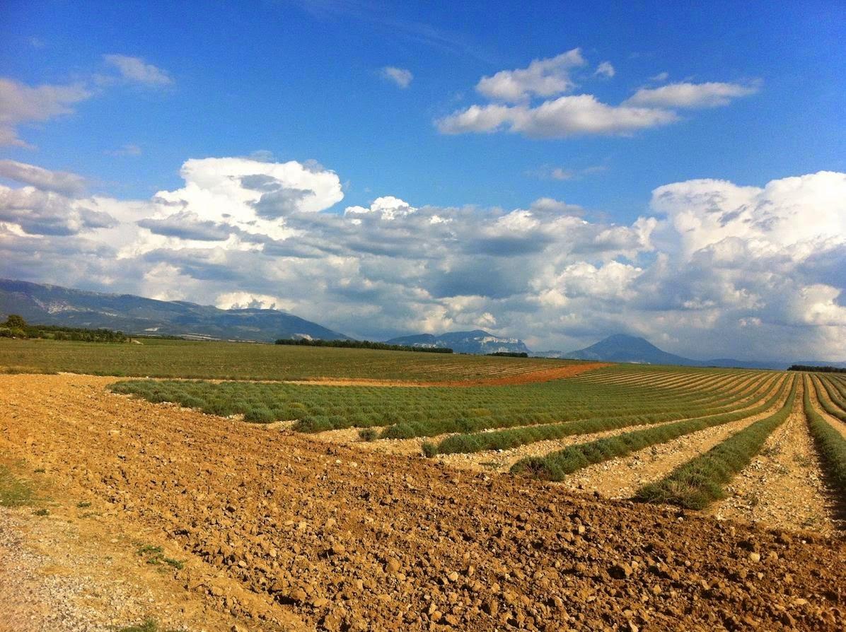 Imparare con la Geografia 20 Lagricoltura e i paesaggi