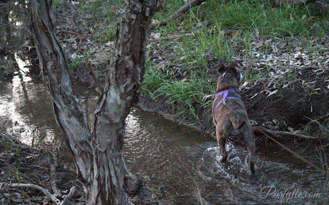 Geri The Wonder Dog loves the water