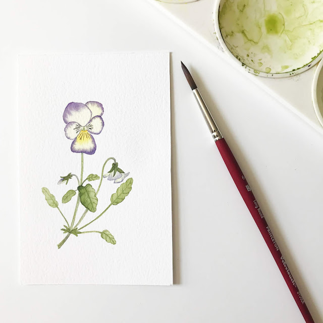 watercolor, botanical watercolor, viola painting, watercolor viola, botanical painting, botanical art, Anne Butera, My Giant Strawberry