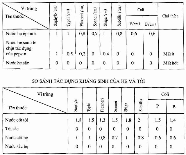 TPHH Cây HẸ - Allium odorum - Nguyên liệu làm thuốc Chữa Ho Hen