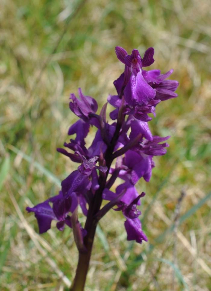 Hybride bouffon et fleurs lâches