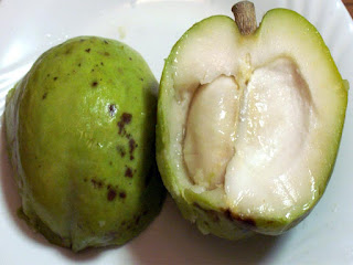 White Sapote Fruit Pictures