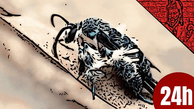 QN NEWS 24h - Mariposa vista há 130 anos, é reencontrada