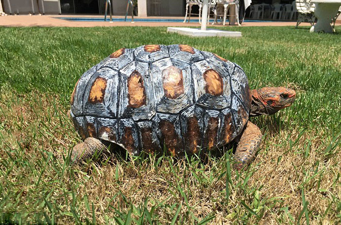 Injured Tortoise Receives World's First 3D Printed Shell - It looks just as good as the real thing!