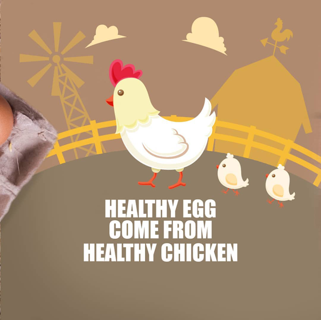 ciri kualitas telur yang baik